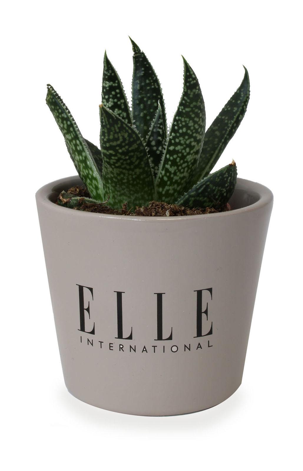 Pot De Plante Pas Cher mini plante dépolluante en pot ceramique personnalisé