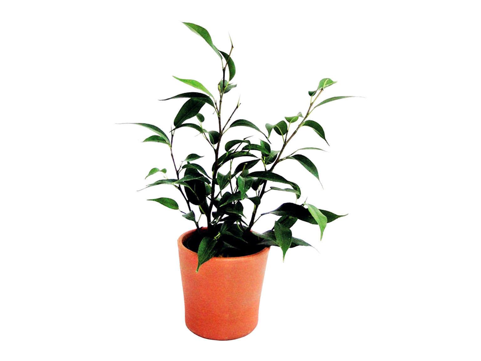 Mini plante d polluante en pot terre cuite promotionnel for Plante en n