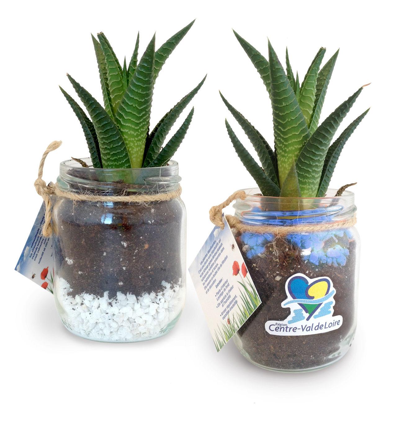 Plante Dépolluante Publicitaire | Colligon | Plantes et arbres publicitaires | KelCom